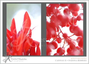 cannas II • nadina berries